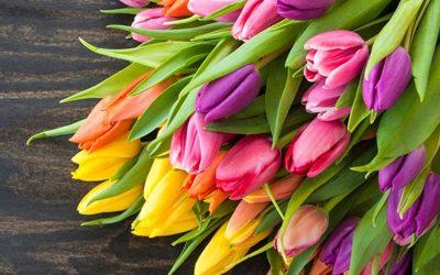 Blumen-Abonnement
